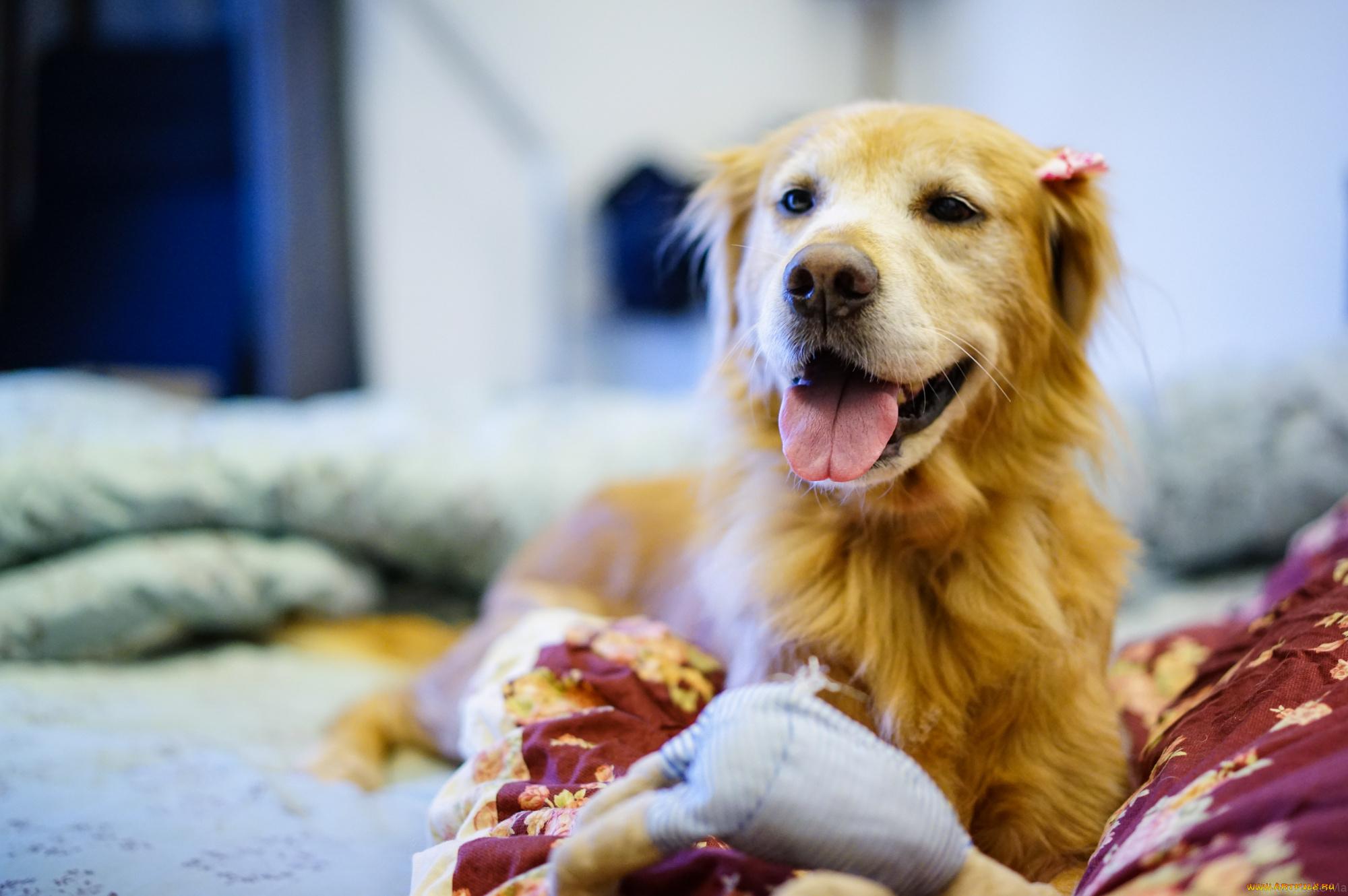 Девочка пёс собака бесплатно