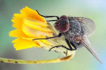 Картинка животные насекомые утро цветок роса насекомое муха макро