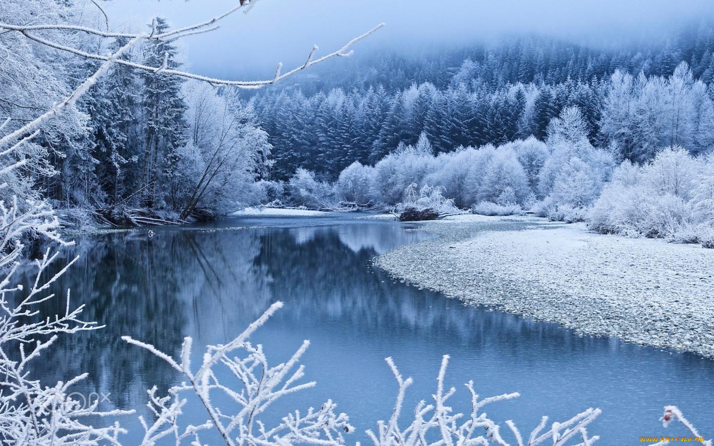 снег ветви лес snow branches forest  № 442881  скачать