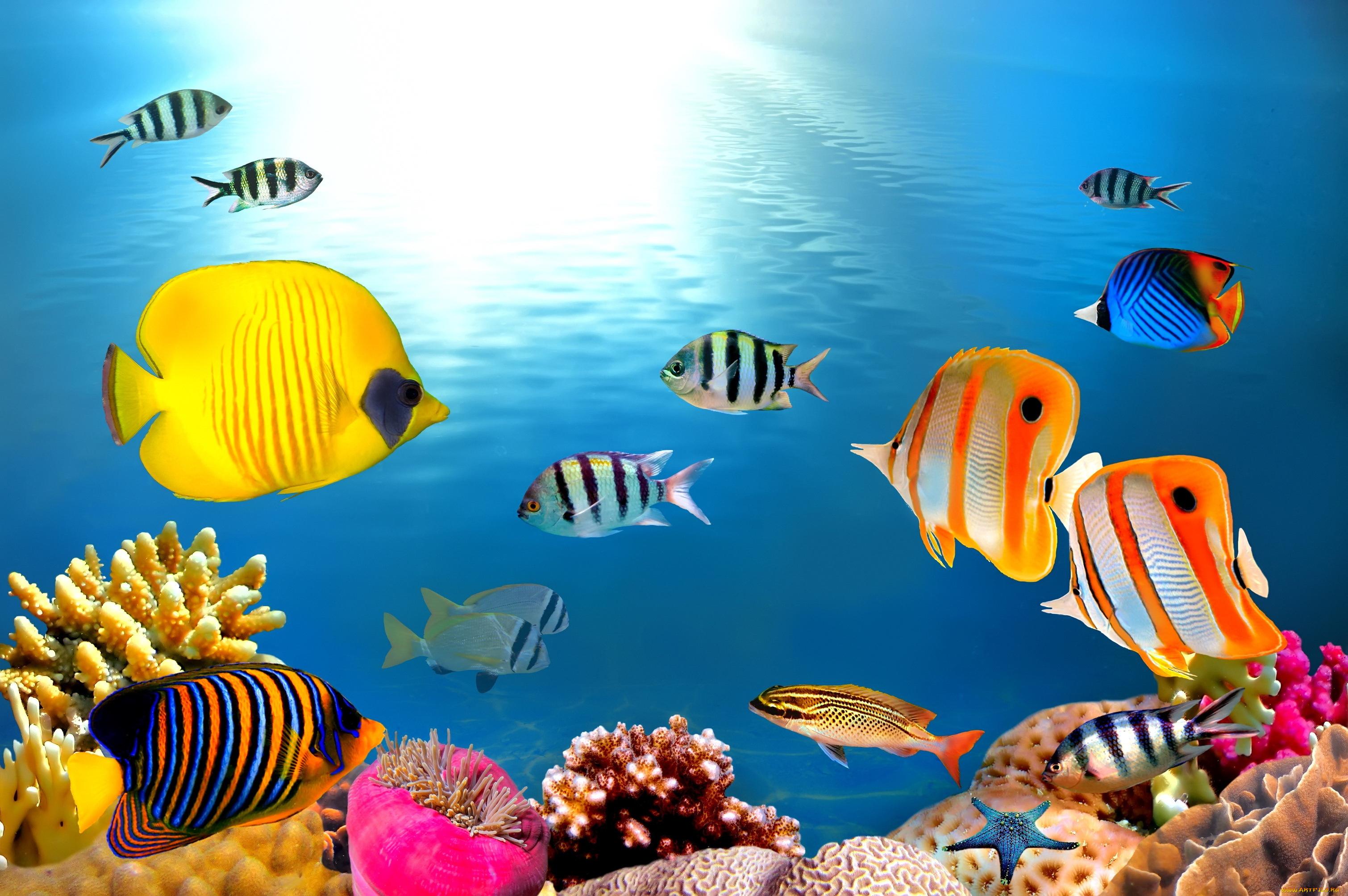 Открытки днем, картинка аквариум с рыбками с анимацией