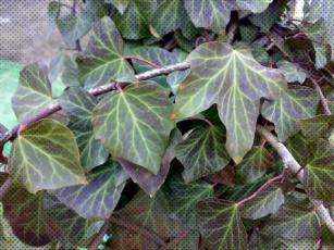 Картинка разное компьютерный+дизайн листья плющ точки обработка зелёные