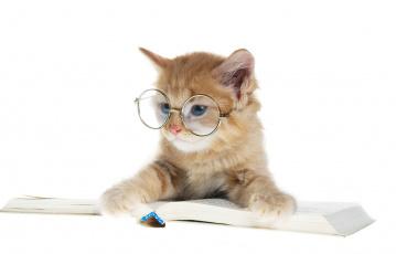 Картинка животные коты читатель