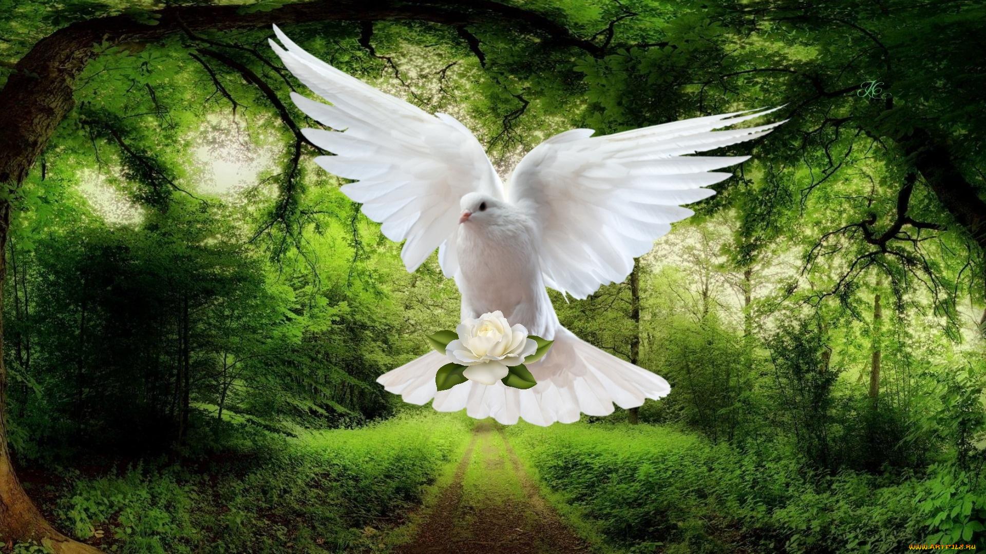 Белый голубь в полете анонимно