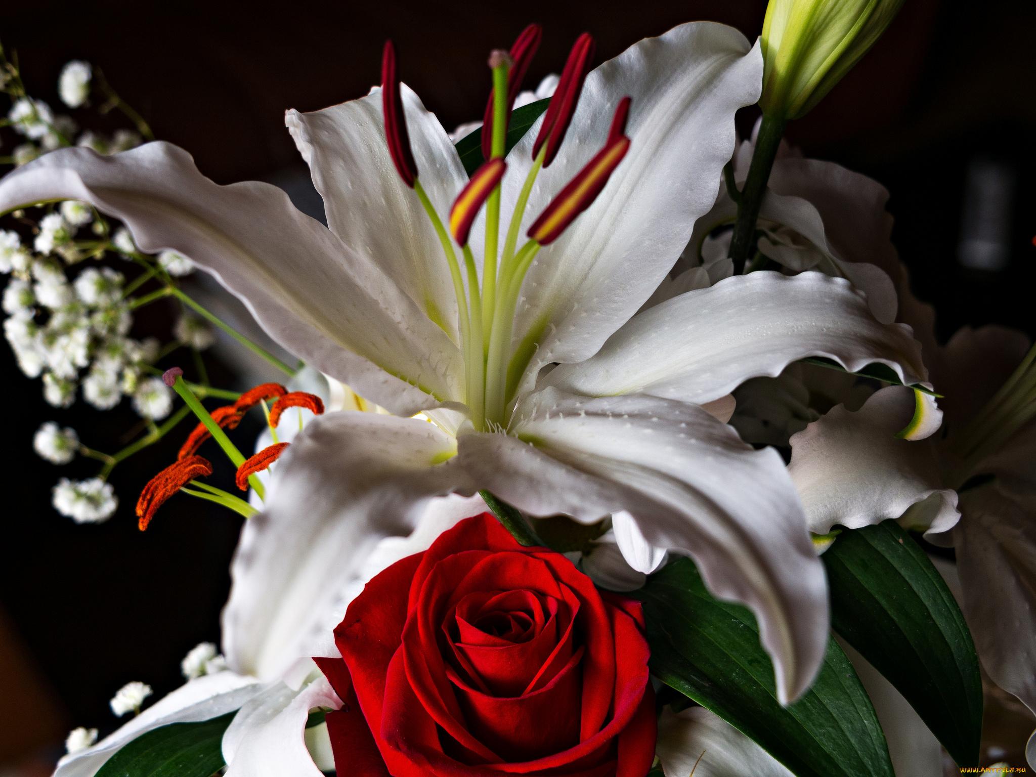 Праздником урожая, лилии и розы картинки