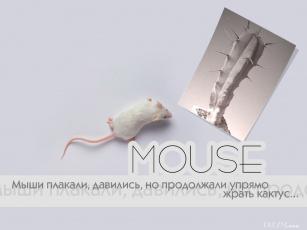 Картинка мышь юмор приколы