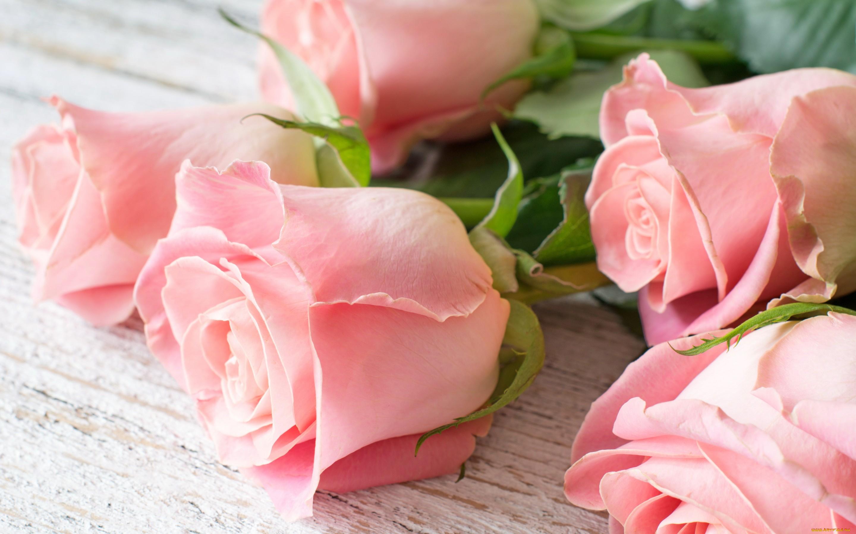 Открытки с розами красивые