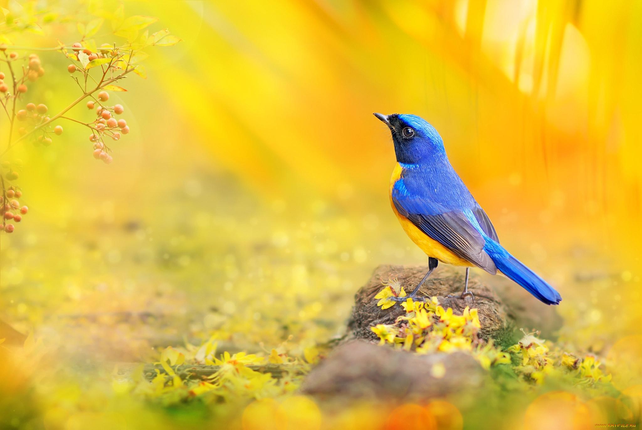 Желтая птичка бесплатно