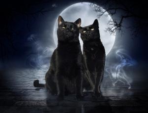 обоя животные, коты, луна, фон, взгляд