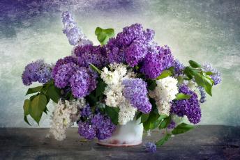 обоя цветы, сирень, белая, лиловая