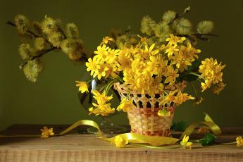 обоя цветы, букеты,  композиции, весна, первоцвет, корзина, верба