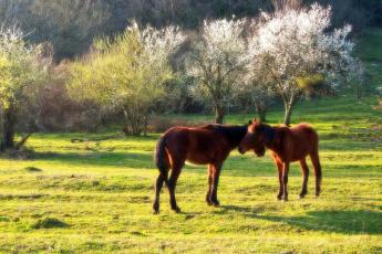 обоя животные, лошади, сочи, кавказ, солнце, никишин, евгений, кони, весна