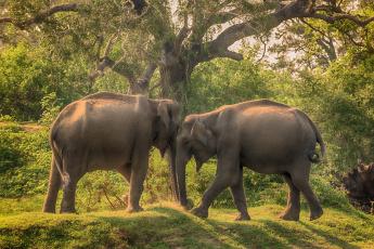 обоя животные, слоны