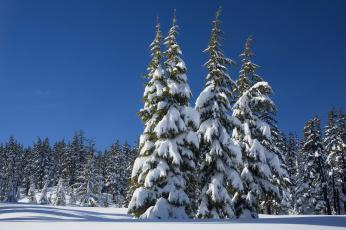 обоя природа, зима, деревья, снег, небо, лес, солнце, сугробы