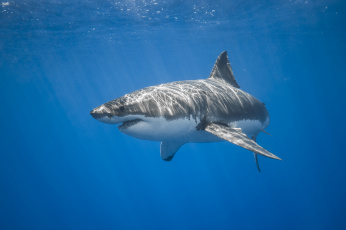 обоя животные, акулы, рыбка