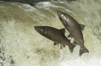 обоя животные, рыбы, рыбка