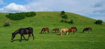 обоя животные, лошади, луг