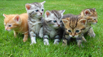 обоя животные, коты, котята