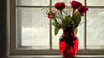 обоя цветы, розы, красный