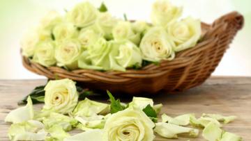 обоя цветы, розы, лепестки, корзинка