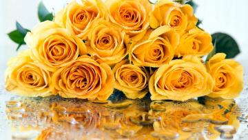 обоя цветы, розы, отражение