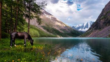 обоя животные, лошади, лошадь, река