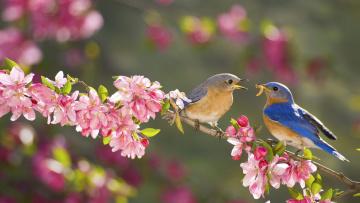 обоя животные, птицы, ветка, цветы