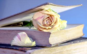 обоя цветы, розы, лепесток, книги, бутон