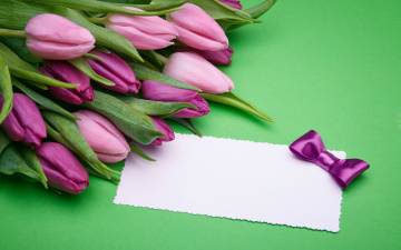 обоя цветы, тюльпаны, лиловый, бутоны, бант, записка, бумага