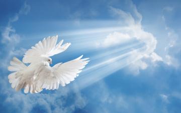 обоя животные, голуби, голубь, небо, полет