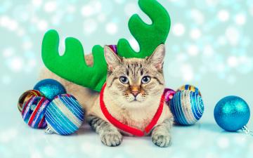 обоя животные, коты, кошка, рожки, игрушки, шарики, кот