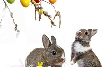 обоя животные, кролики,  зайцы, colorful, пасхальный, willow, twig, easter, корзина, верба, flowers, eggs, decoration, bunny, пасха, цветы, крашеные, яйца, rabbit, весна, spring, ветки
