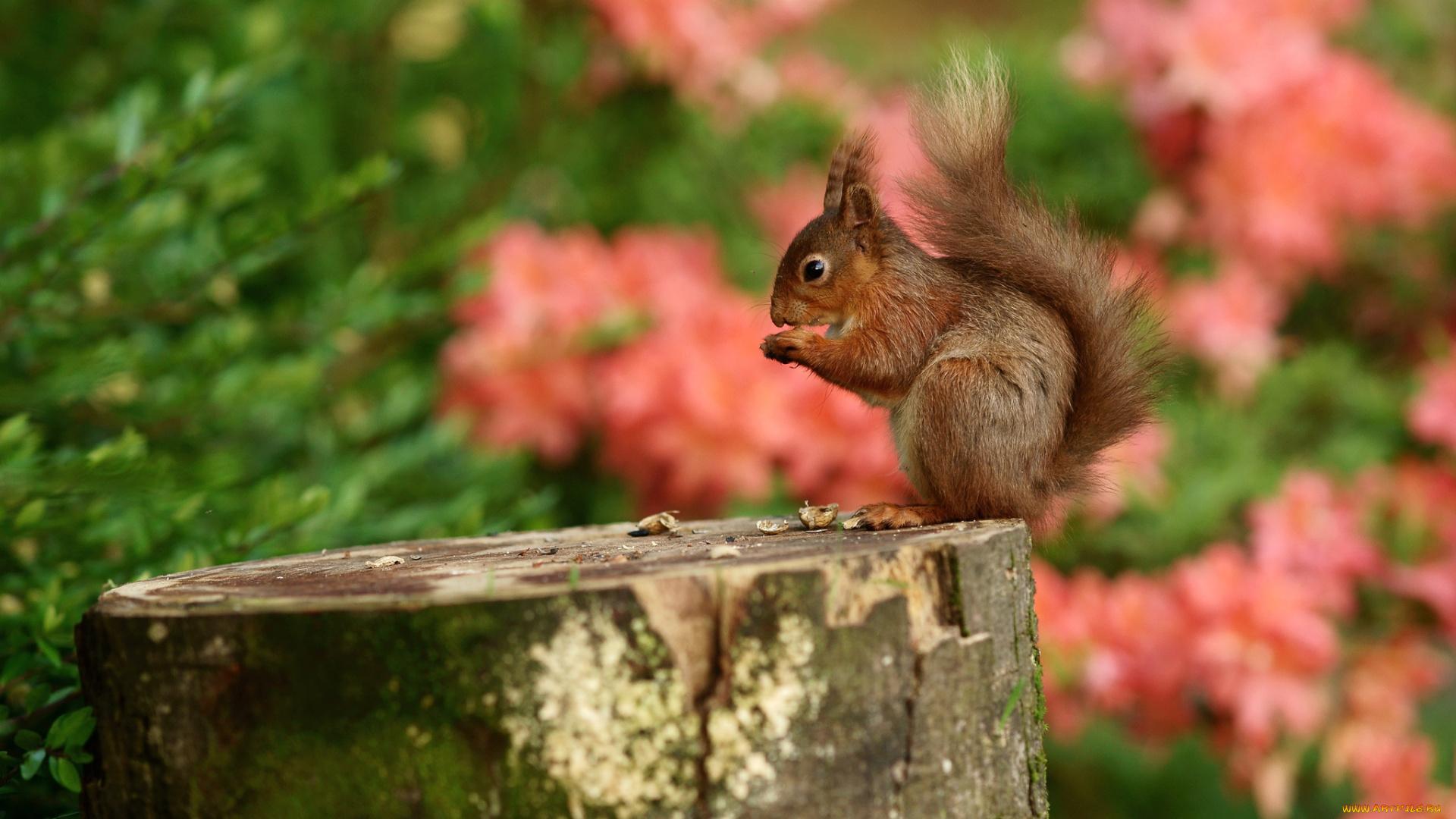 природа осень животное корзина семечки белка  № 2096110 без смс