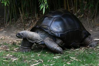 обоя животные, Черепахи, черепаха