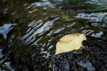 Картинка природа листья осень вода макро