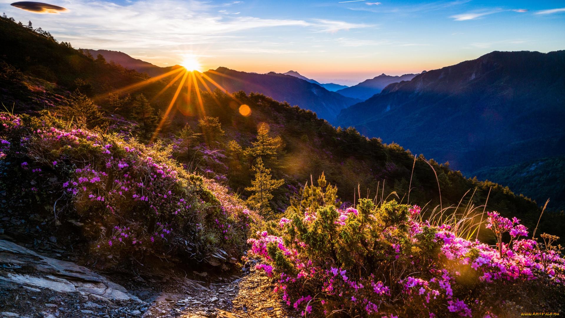Надписями, картинки утро природа красота