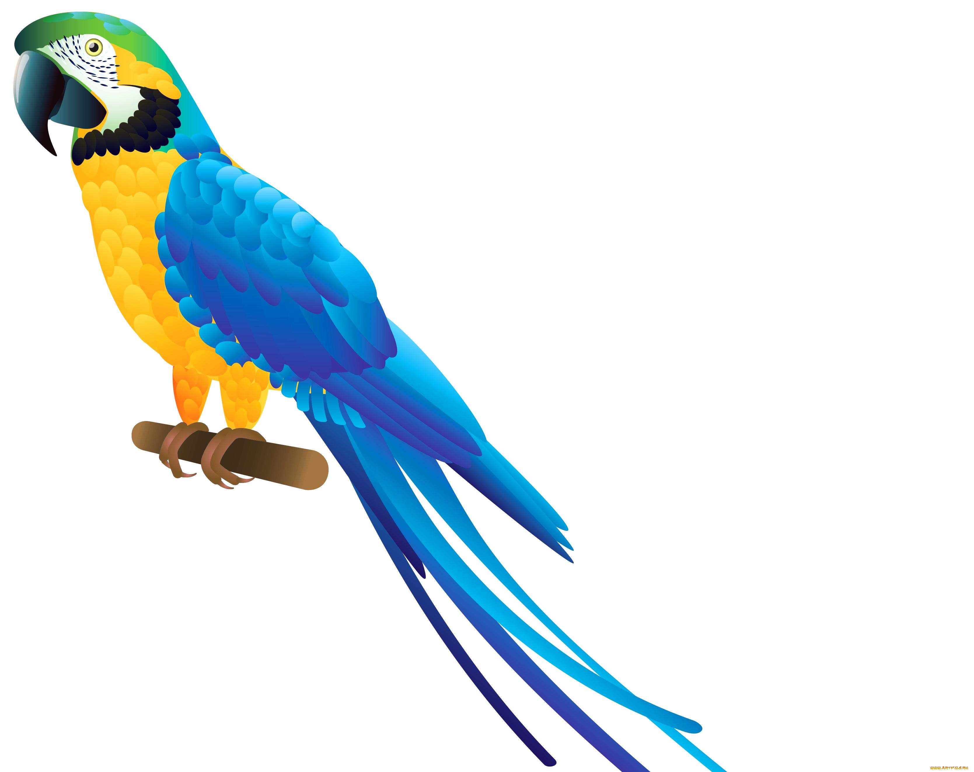 Днем, попугай картинка для детей