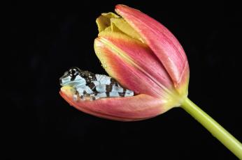 обоя животные, лягушки, фон, боке, цветок, окрас