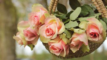 Картинка цветы розы лукошко фон природа букет корзинка роза лепестки висят сад висит лето розовые композиция листья нежные дерево бутоны ветка