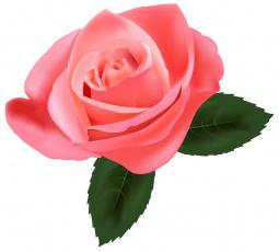 обоя векторная графика, цветы , flowers, роза, фон, цветы