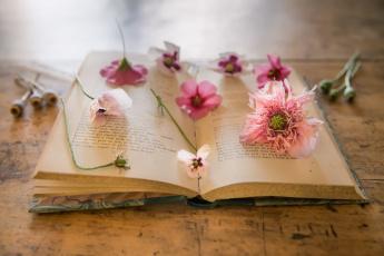 обоя разное, канцелярия,  книги, книга, фон, маки, цветы