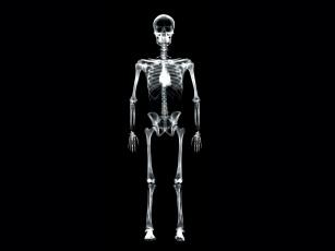 обоя рентген, 15, разное