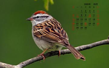 Картинка календари животные