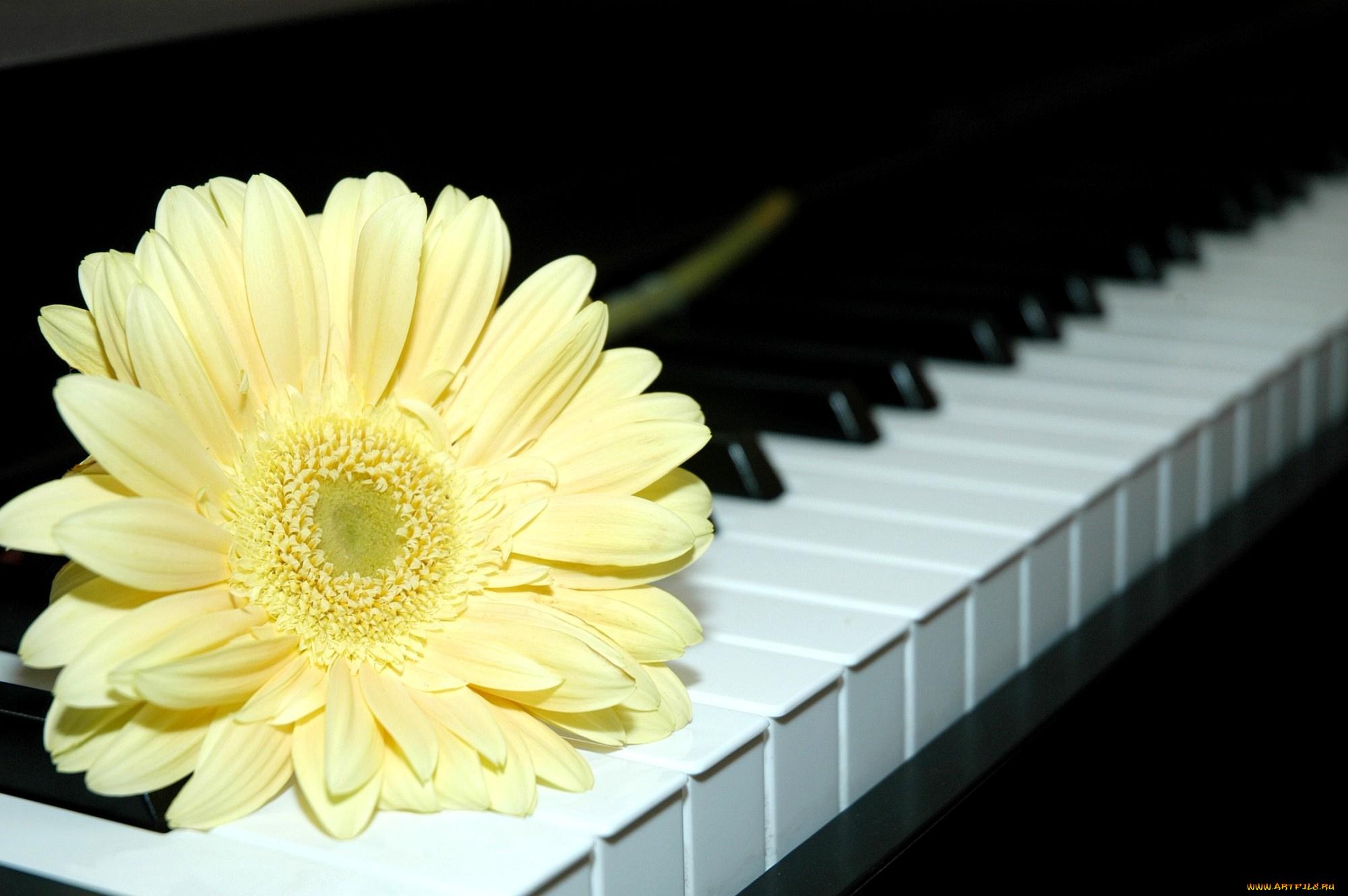 Картинка с клавишами и цветами, открытки лет