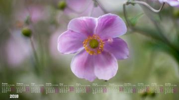 Картинка календари цветы бутон