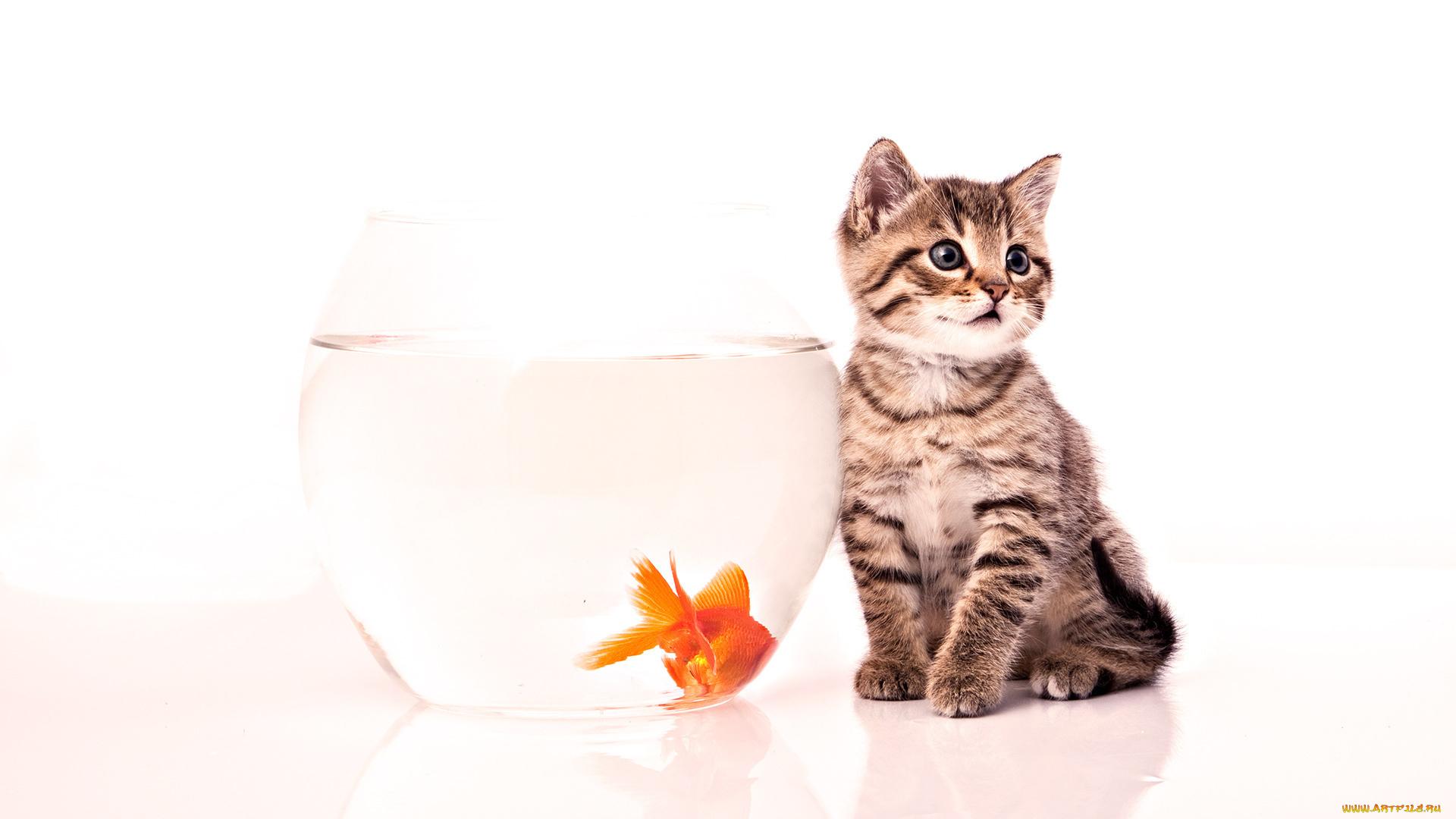 серый кот с рыбкой  № 692213  скачать