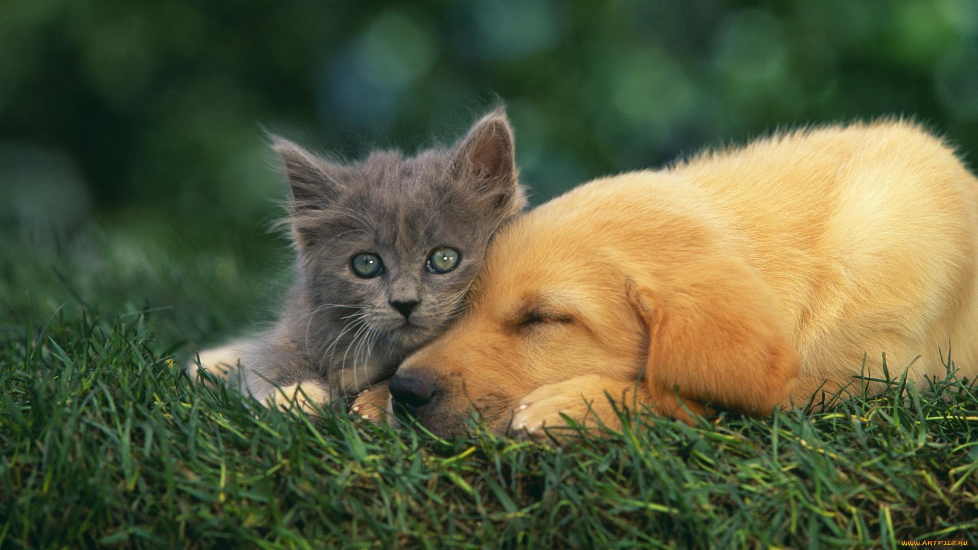 Картинка кошки и собаки