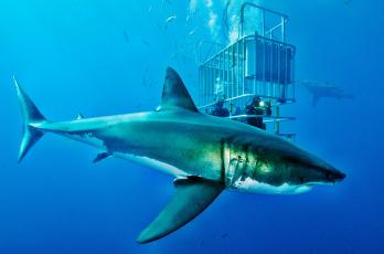 Картинка животные акулы клетка акула глубина океан