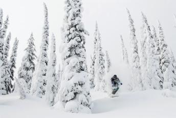 обоя спорт, лыжный спорт, горнолыжный, деревья, снег