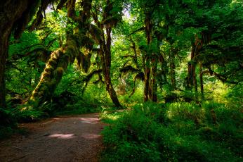 Картинка природа лес джунгли