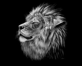 Картинка рисованные животные